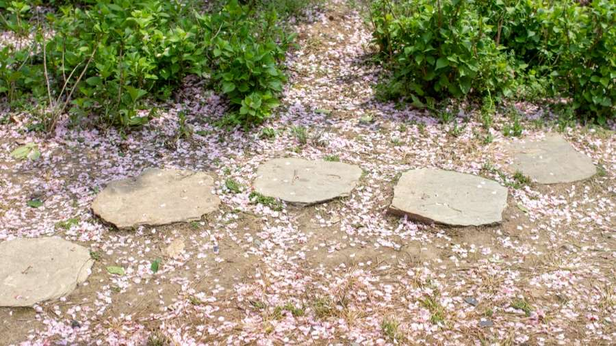 Why Round Stepping Stones Are Ideal for Your Garden
